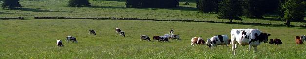 association des bergers du jura franco-suisse et leurs amis